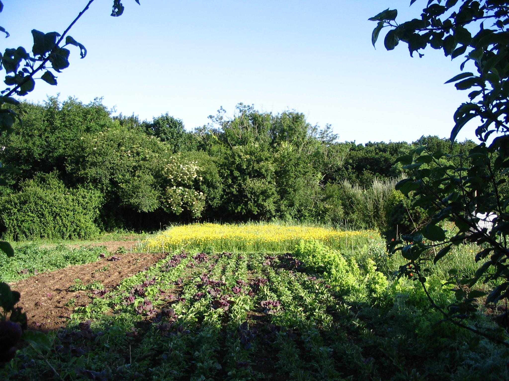 jardin park ar skoazell brest vert le jardin. Black Bedroom Furniture Sets. Home Design Ideas
